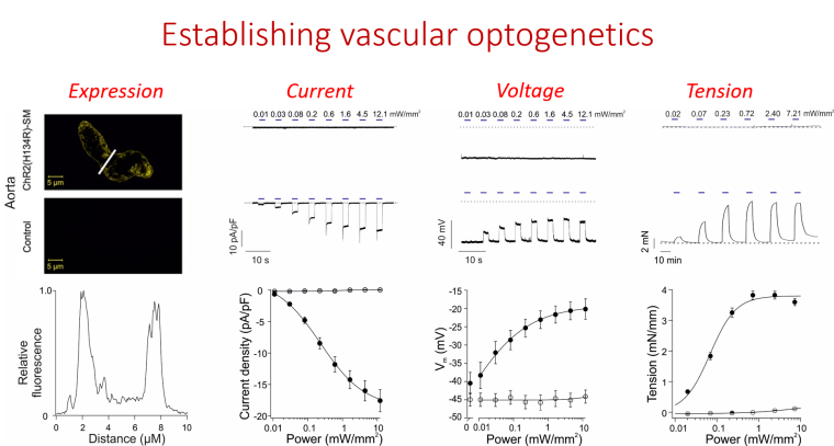 Pictureoptogenetics.png