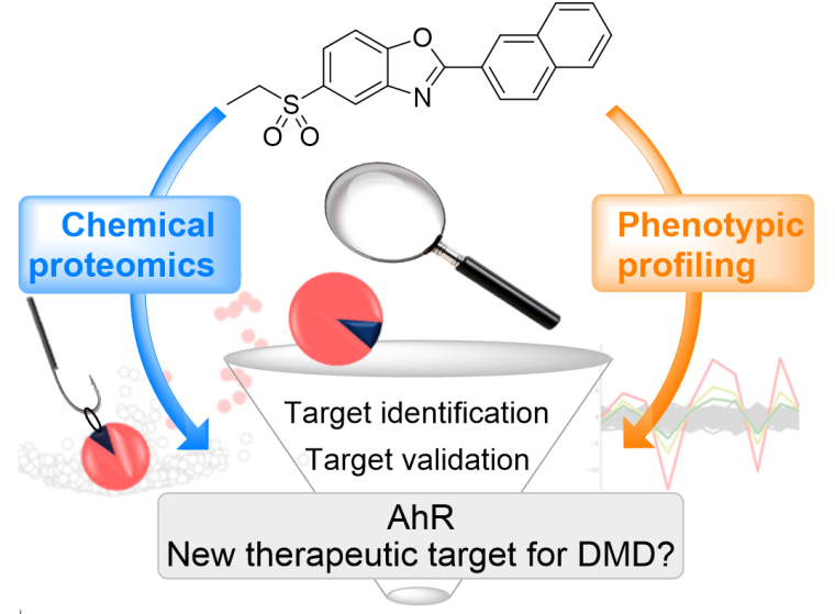 New therapeutic target for dmd