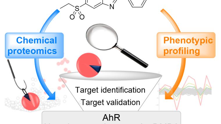 Russell group research reveals molecular target of the utrophin modulator ezutromid