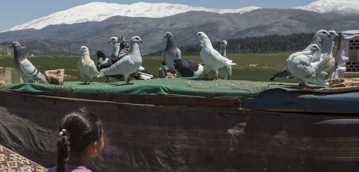"""Some families fleeing Syria brought with them their prized homing pigeons. """"I look at them and I remember home,"""" says one refugee at Mar el Kokh informal settlement, in Lebanon, where it is common to see homing pigeons flying overhead."""