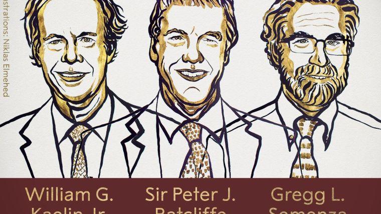 Sir peter radcliffe wins nobel prize