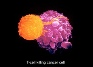 Dong group human anti viral cancer t cell responses 4