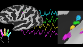 Published Paper: Journal of Neuroscience
