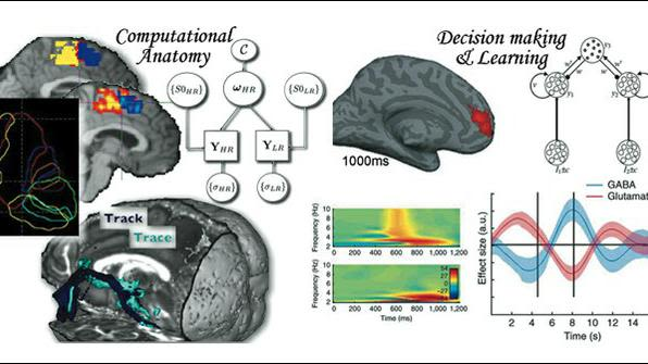 We investigate anatomical organisation and cortical processing using computational models and techniques.