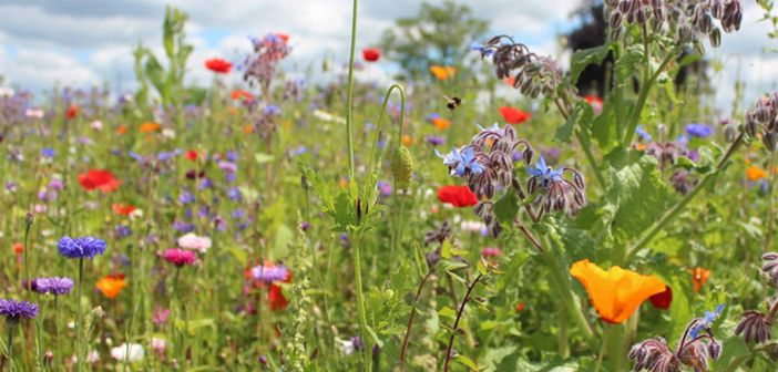 New meadow at the Warneford Hospital
