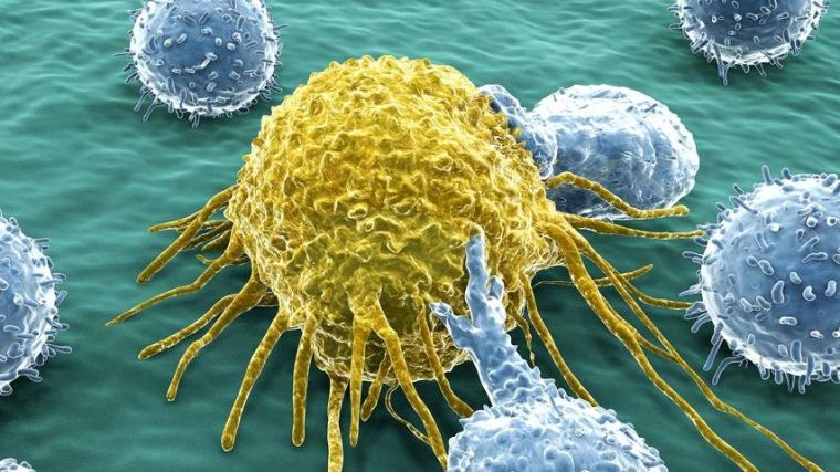 The development of immunotherapeutics has revolutionised treatment for cancer patients