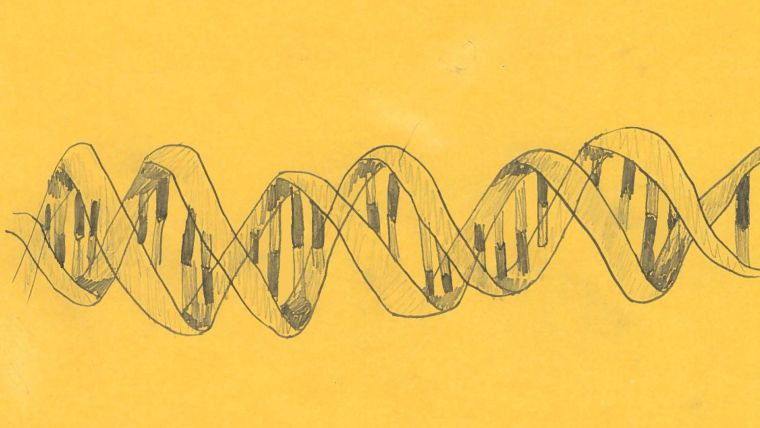 A pencil drawing of the double helix structure of DNA  (illustrative only)
