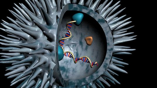 Graphical representation of a pathogen with a cross section removed. DNA helixes are inside