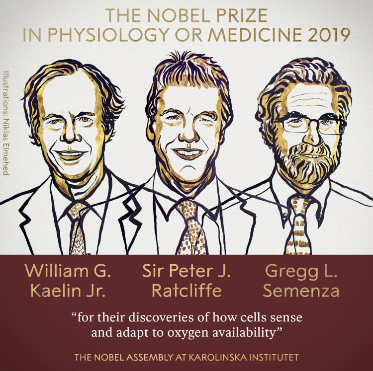 """Poster """"The Nobel Prize in Psychology or Medicine 2019"""""""
