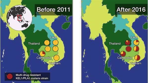 Multidrug resistant malaria spreading in asia