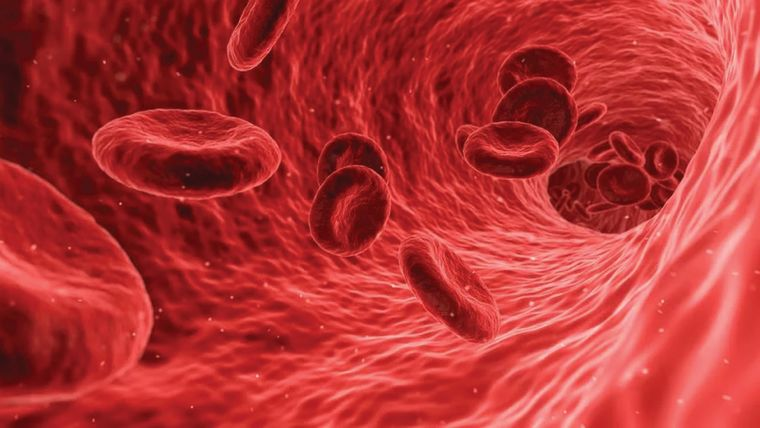 Image of red blood cells inside a blood vessel