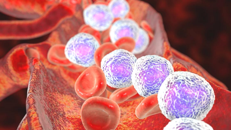 White blood cells circulating in the blood stream
