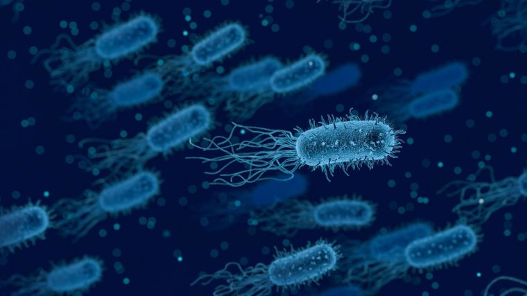 A generic picture of bacteria