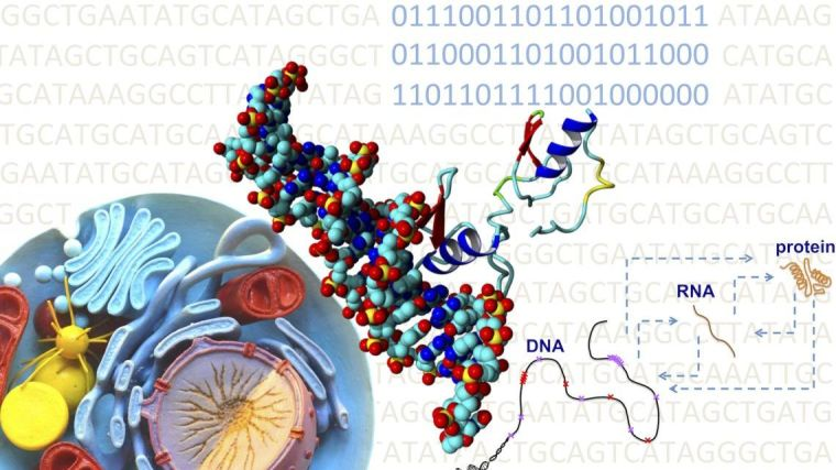Combining computational biology, computational chemistry, and machine learning techniques with biological big data to unravel the higher genomic code of life.