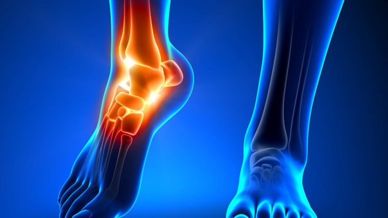 Ankle bones and joint