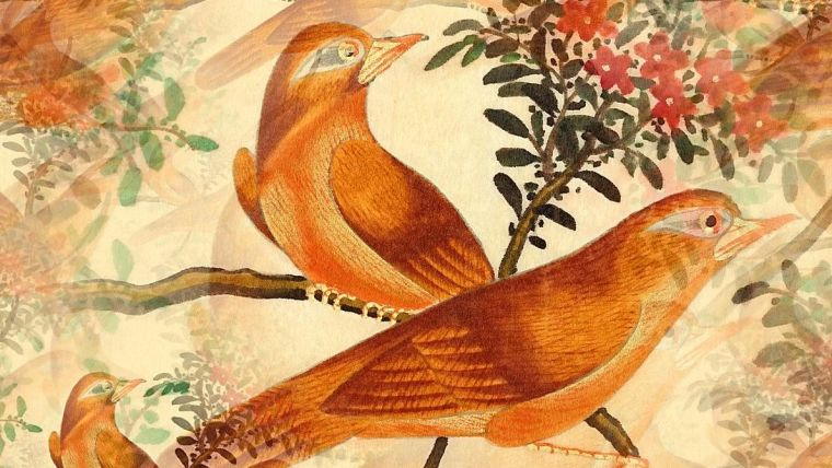A drawing of birds on old wallpaper