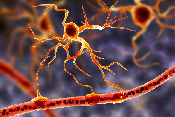 A stylised graphic of an astrocyte attached to the axon of a neuron.
