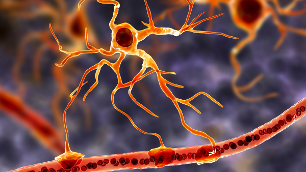 A stylised graphical image depicting a type of brain cell known as astrocytes