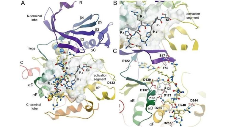 Binding mode of ARC-1411 in PIM-1 and comparison with a PIM substrate complex