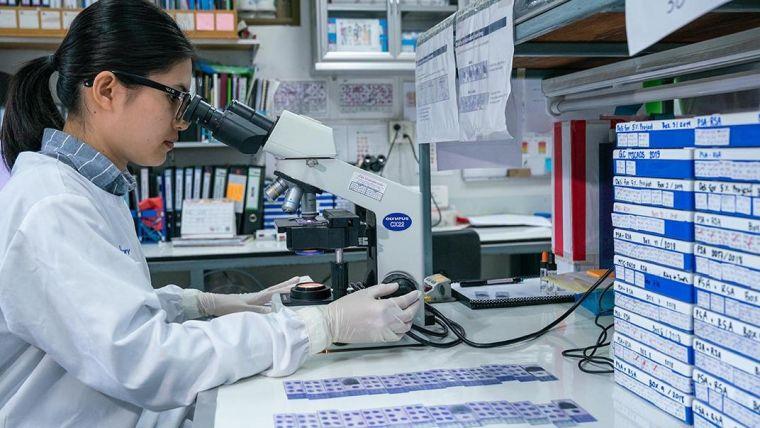 An SMRU researcher reviews malaria research data.