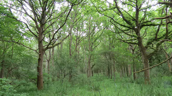 The Monks Wood Wilderness in 2021, after 60 years of natural regeneration