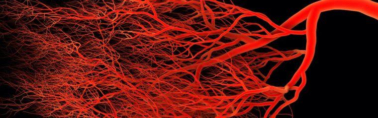 Network of blood vessels