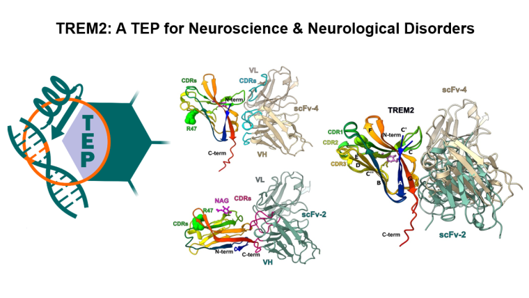 TREM2 - A TEP for Neuroscience & Neurological Disorders