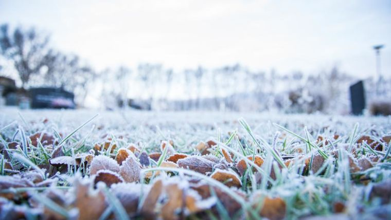 Cold morning with close-up of frosty leaves