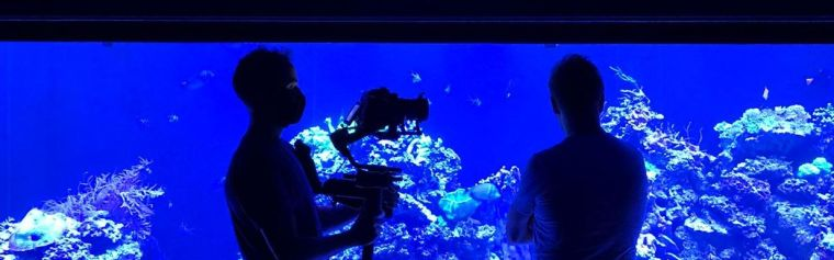 Two figures are seen in silhouette against the bright background of a large aquarium tank