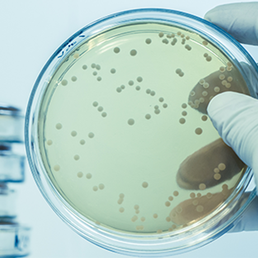 Close up of scientist hand holding a Petri dish in a laboratory