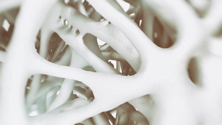 View through bone