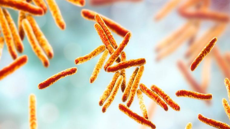 Bacteria Mycobacterium tuberculosis, the causative agent of tuberculosis,