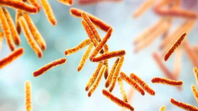 Mycobacterium tuberculosis bacillus