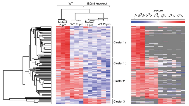 Identification of substrates deISGylated by SARS-CoV-2 PLpro