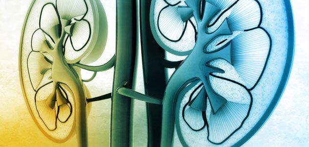 Many hands make better trials: cutting cardiovascular risk in chronic kidney disease