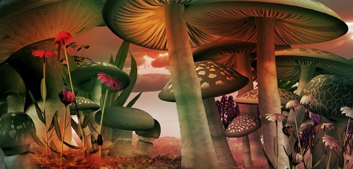 The other side of the magic mushroom debate