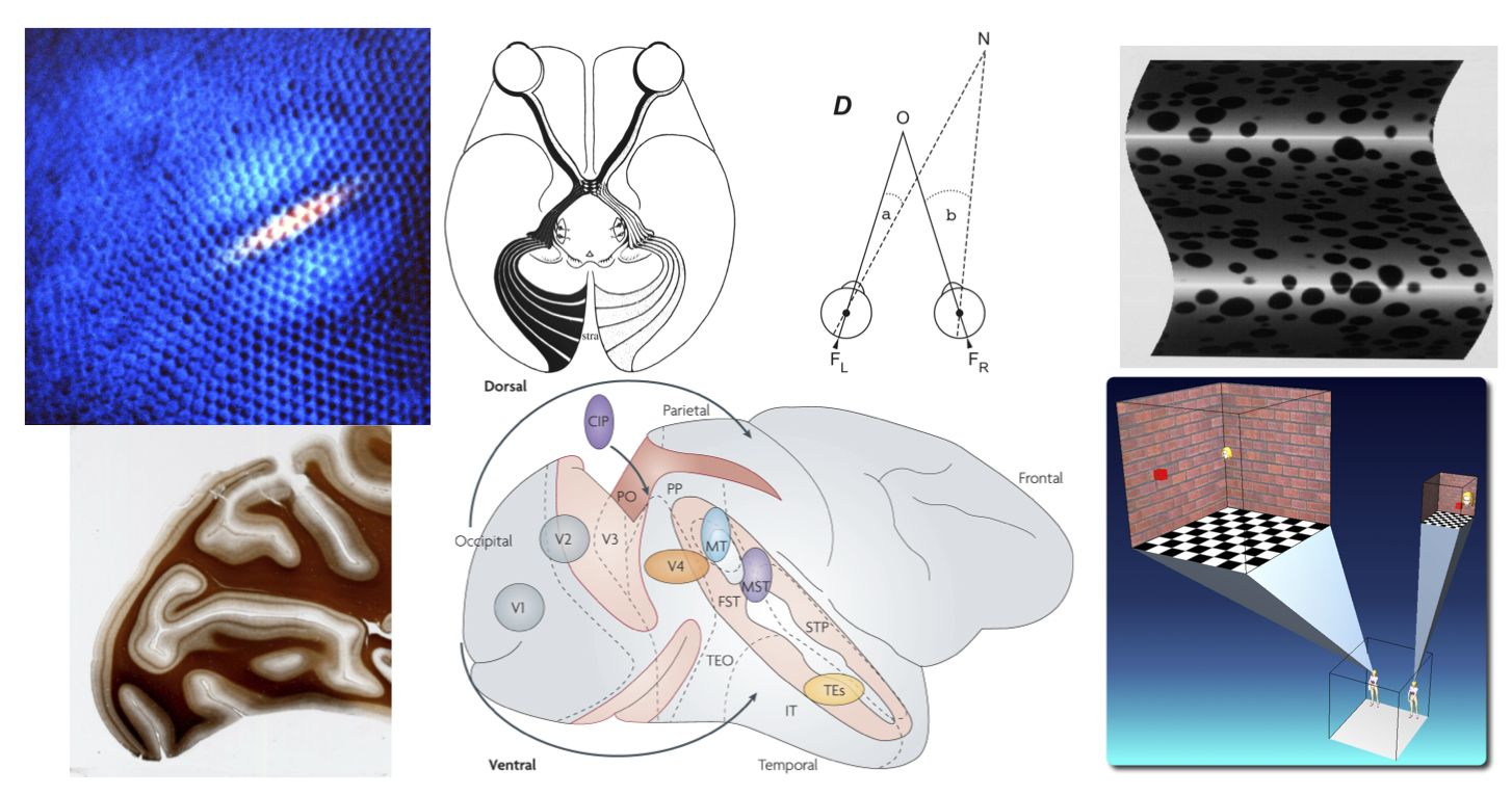 Neural systems and circuits for visual perception