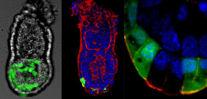 Morphogenetic cell movements during development