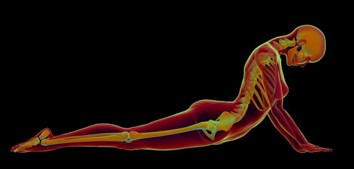 MusculoSkeletal Science