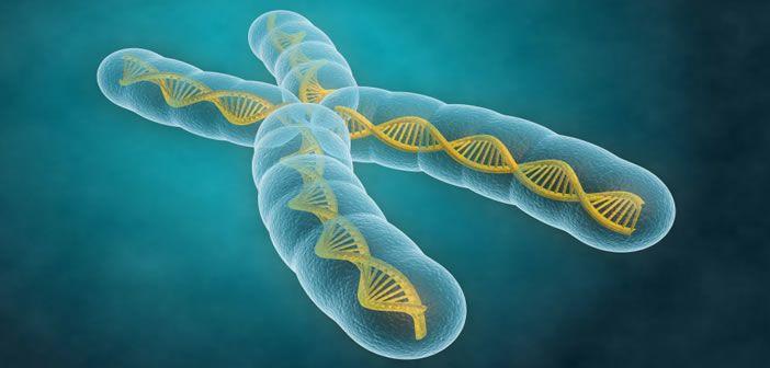 Investigating genetic variation in health and disease.