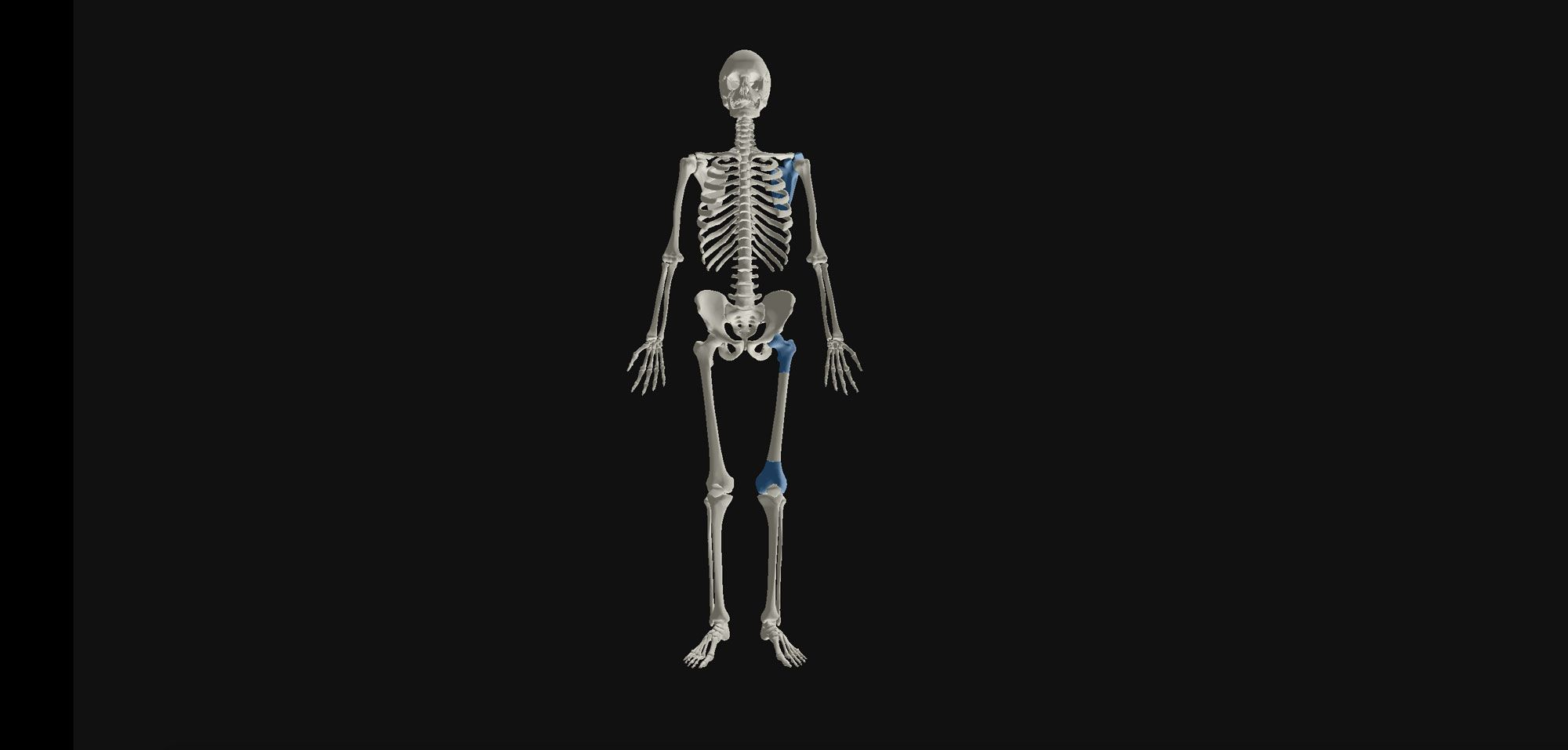 Our research focuses on the evolutionary origins of human bones and their associated modern day orthopaedic problems. We are particularly interested in the evolutionary adaptations that have resulted in the current human skeleton.