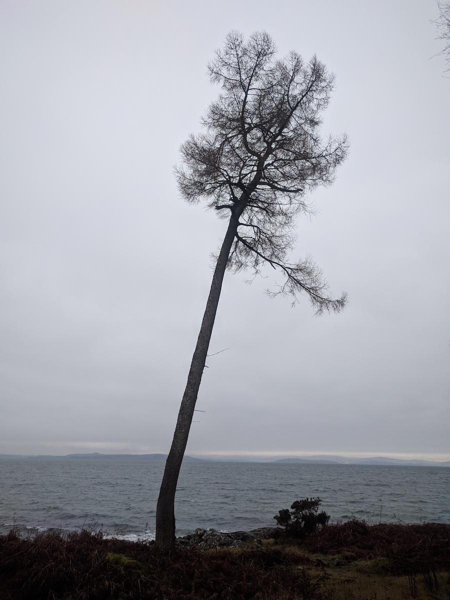 winter trees at north sannox