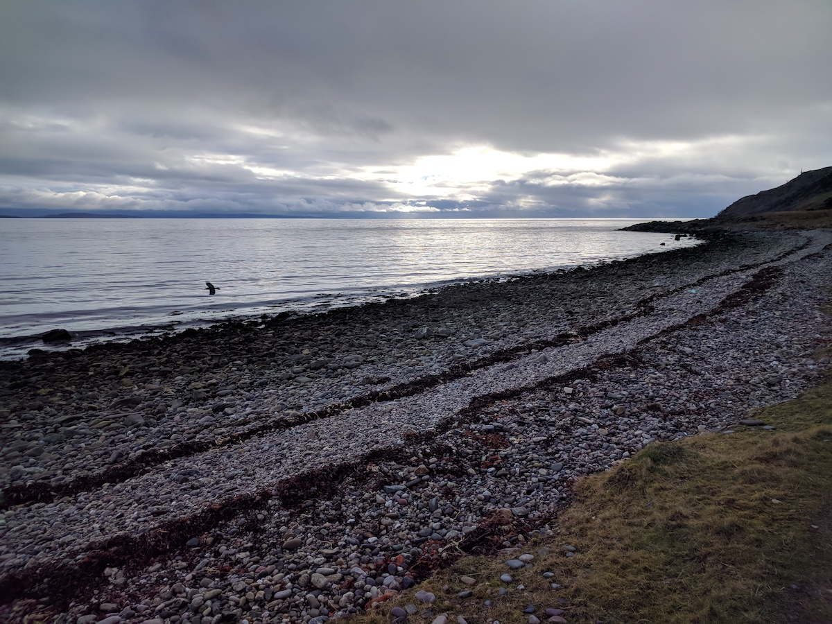 raven on the coastal path arran