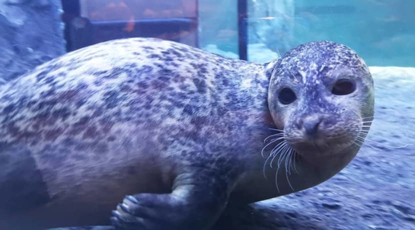 Foster seals are the stars of the show at Sea Life Centre, Birmingham