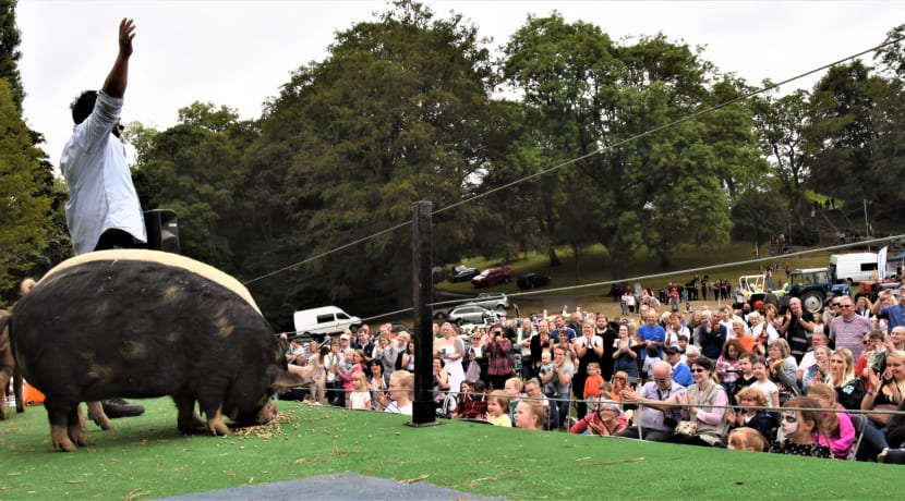 Pigs to return to Kenilworth show for first time in five years