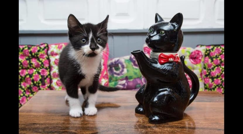 Warwickshire's first cat cafe opens in Stratford