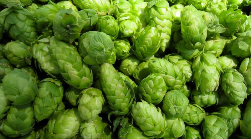 Debut hop festival comes to Worcester