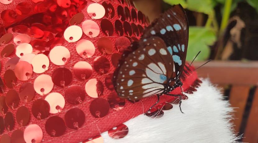 Meet the mini-beast at Stratford Butterfly Farm this festive season