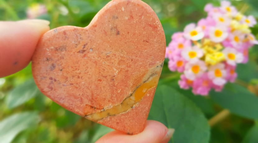 Feel the love at Stratford Butterfly Farm