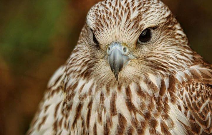 Encounter birds and beasts at Hartlebury Castle this Easter